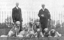 Golden Retrievers em 1906