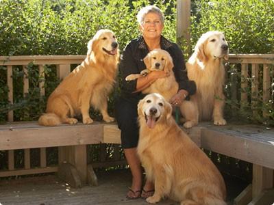 Sue Schnarr com seus Goldens do Snowhoes Goldens